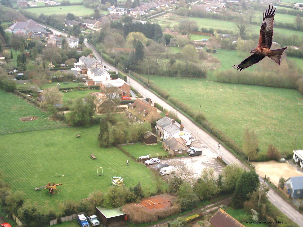 Aerial Recce of Red Kites